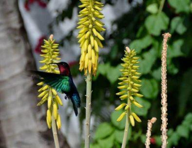Un colibri dans le jardin !