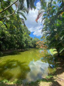 Ferme aquacole de Pointe Noire en Guadeloupe - Le bassin de pêche